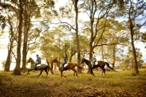 bush-riding
